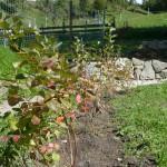 Beeren-Blumen-Kräutergarten
